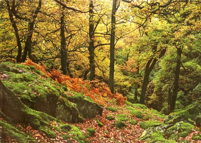 the-ullswater-way-in-autumn-aira-woods