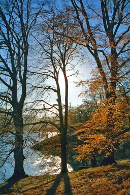 the-ullswater-way-in-autumn-woods-near-glenridding-portrait