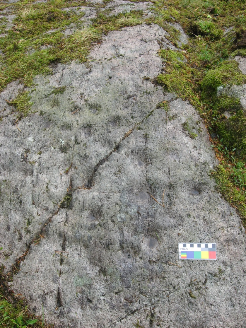 Cup marks on an outcrop at Allan Bank, Grasmere (in the garden of the National Trust property). Photo credit Kate Sharpe